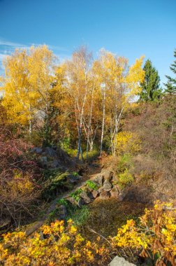 Autumnal Moscow park. Autumn birch trees at sunny day.