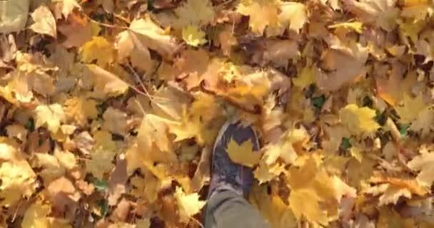Beine in Turnschuhen rascheln mit gelben Blättern, goldener Herbst, schwarze Hose, schwarze Mäntel