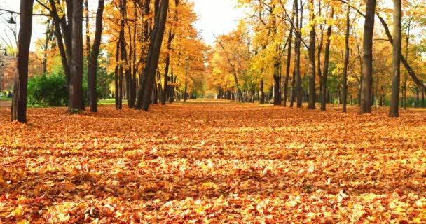 Arany ősz Park avenue, fák, napsütéses nap, egyértelmű weather, gondolatok, levelek a földön, árnyékok a fák, a sárga szín