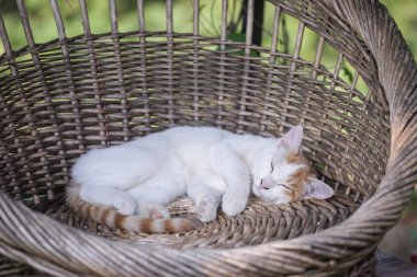 A cat rests at the cat paradise in the suburb of Zhengzhou city, central China's Henan province, 8 September 2018