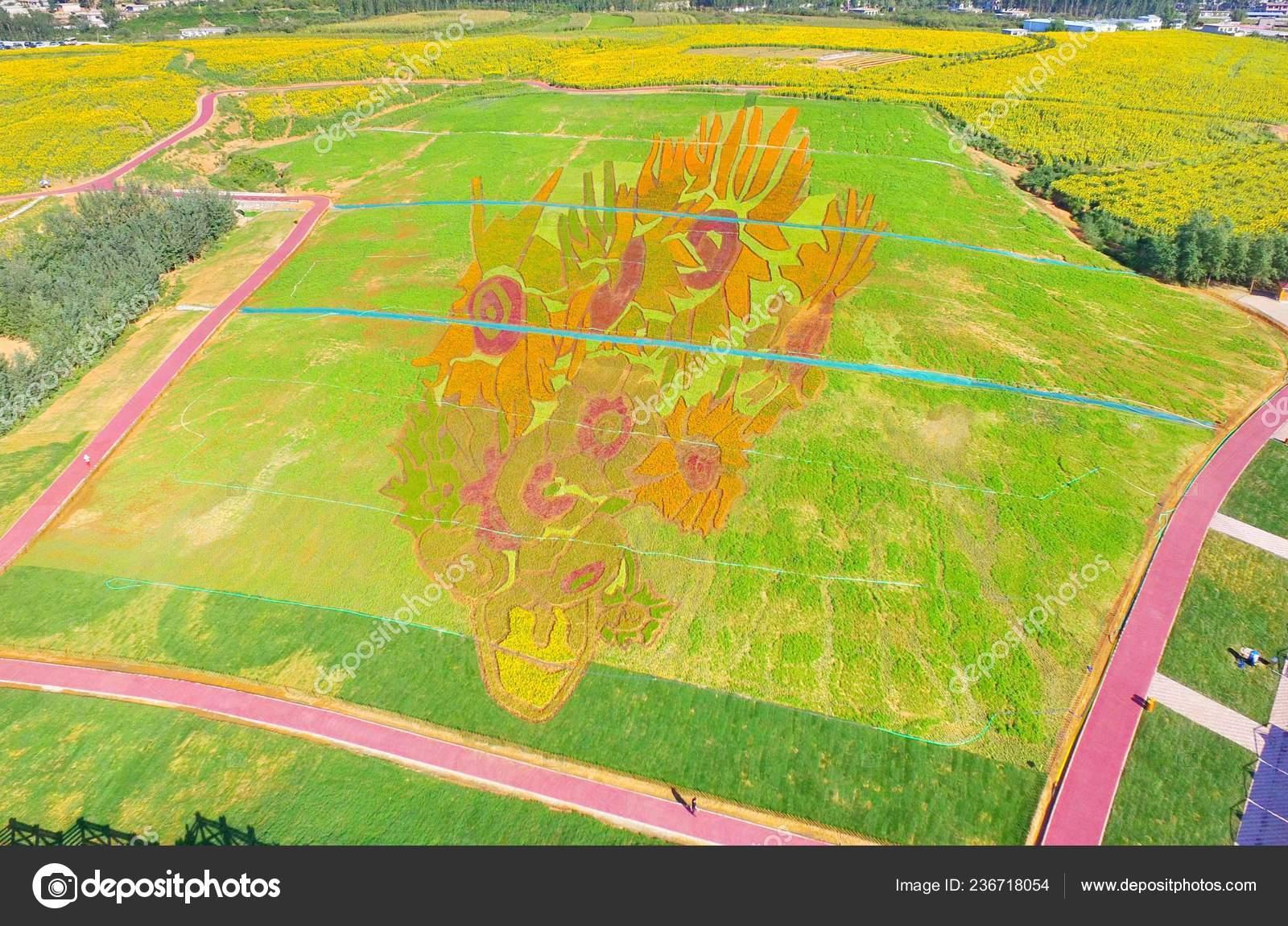 Aerial View Colorful Plants Pattern Vincent Van Gogh Masterpiece
