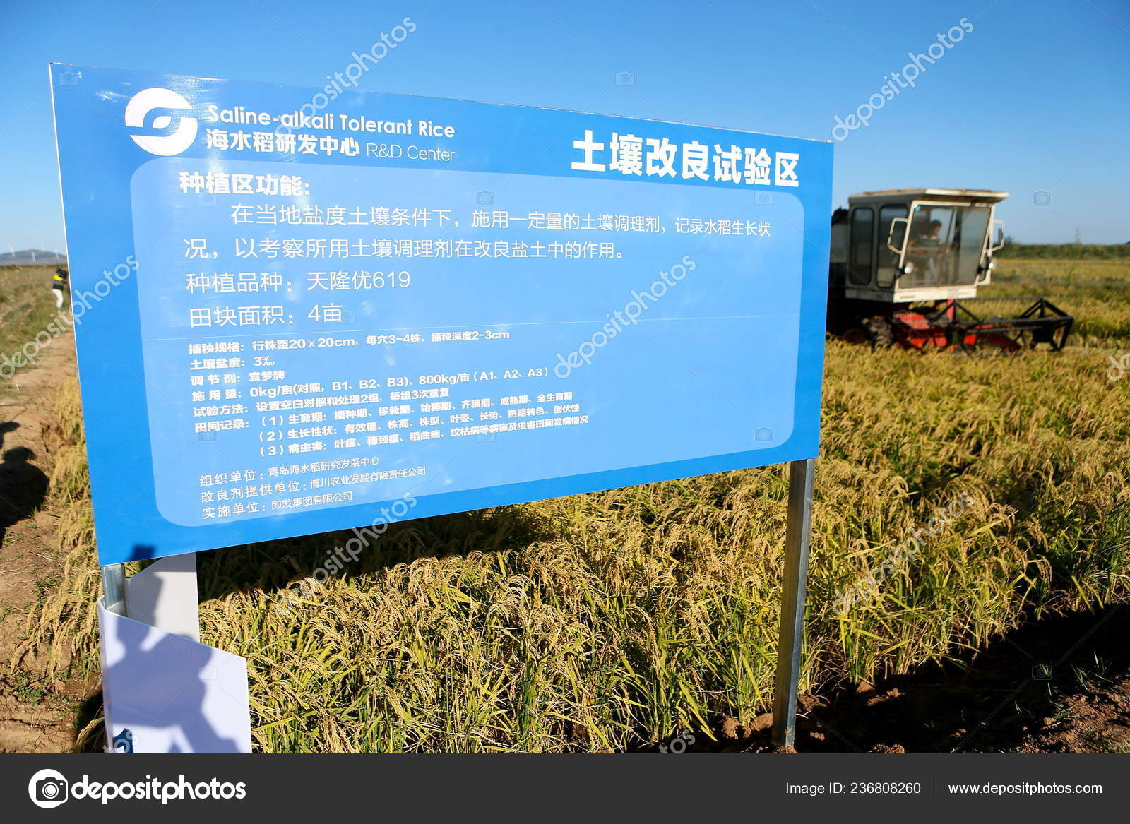 Machine Harvest Rice Can Survive Salinity Rice Growing