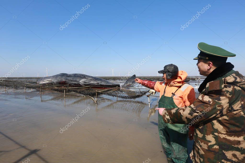 A Chinese paramilitary policeman talks with local fisherman Sang Shengbing, who found a sperm whale stranded on a beach, in Changsha town, Rudong, Nantong city, east China's Jiangsu province, 15 February 2016