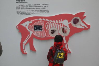 A child visits the special exhibition featuring the zodiac of pig for the Year of the Pig at the Shanghai Science and Technology Museum in Shanghai, China, 29 January 2019