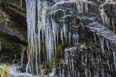 Huge cold icicles on nature background