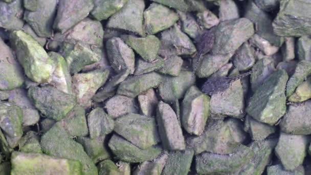 Kaulquappen ruhen auf grünen Algen, die kleine Steine im Wasser bedecken. plötzlich schwimmen und Algen auf Kieselsteinen fressen. Das Wasser ist mit Kaulquappen-Kot und Algen gefüllt.