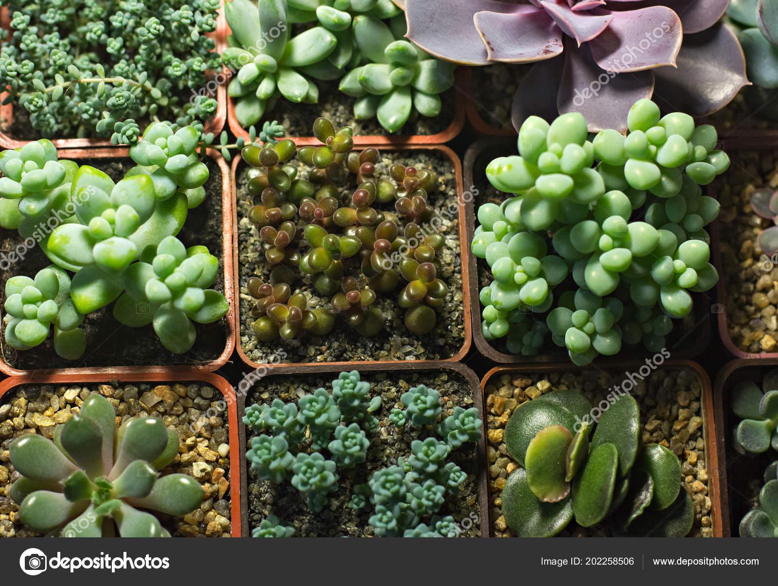 Piante grasse mensola vetrina con piante grasse vendita fiori