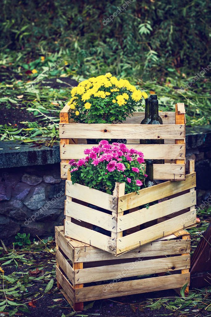 Halloween, Thanksgiving, decoration of the house and garden for the holiday. Wooden boxes with chrysanthemums and wine bottles. Autumn still life with flowers.