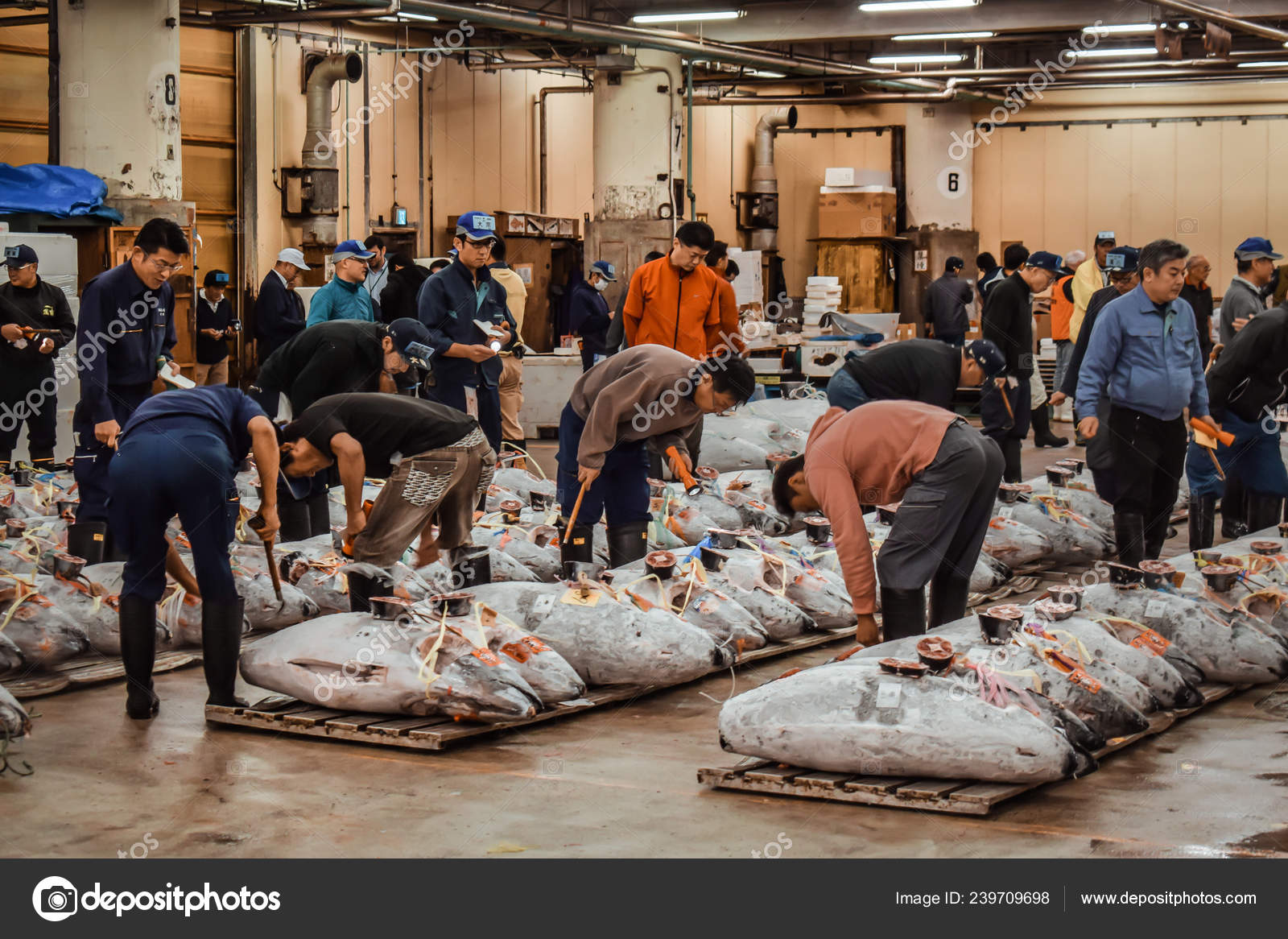 Professional Fish Buyers Inspecting Frozen Tuna Tuna Auction Tsukiji