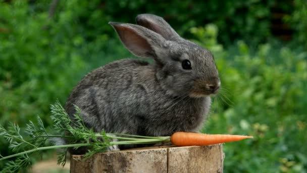 krásné zvíře přírody u králíků