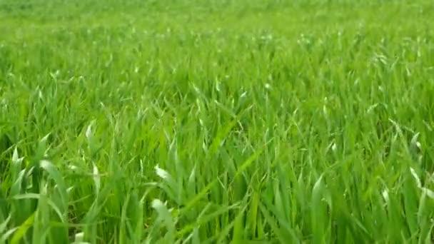 Grass zöld mező landscapegrass zöld