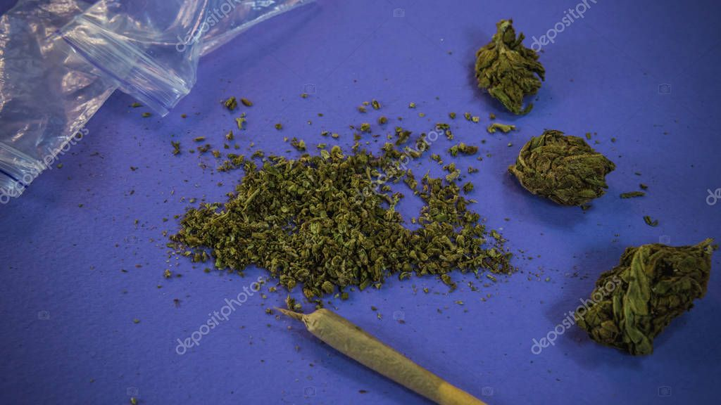 Marijuana buds, weed and joint lay on blue background.