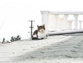 Fotografie kočka sedí na střeše