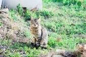 Fotografie kočka sedí na trávě