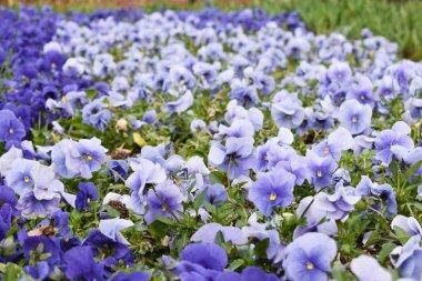 "Картина, постер, плакат, фотообои ""фиолетовые цветы, весенний фон картины орхидеи подсолнухи сакура"", артикул 254911192"