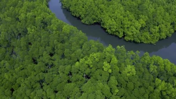 grüne Mangrovenwälder und Flüsse am Coron, Busuanga, Philippinen. Luftbild 4k