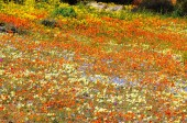 Skilpad a Kalahári Nemzeti Park látképe