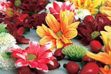 Colorful bouquet of Dahlias.