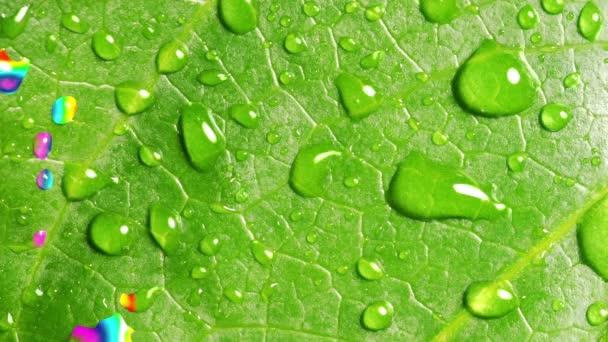 Szivárvány tükröződik az eső cseppeket a zöld levél. Varratmentes a hurkos.