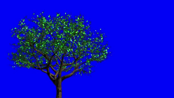 Leaves Appear On The Tree, They Turn Yellow And Then Fall Off. Concept Of Changing Of The Seasons From Spring To Autumn. Blue Screen. 3D Animation.