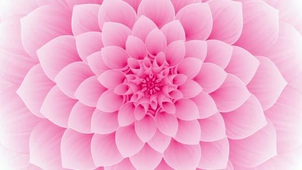Kvetoucí růžový květ. Bezešvé smyčky.