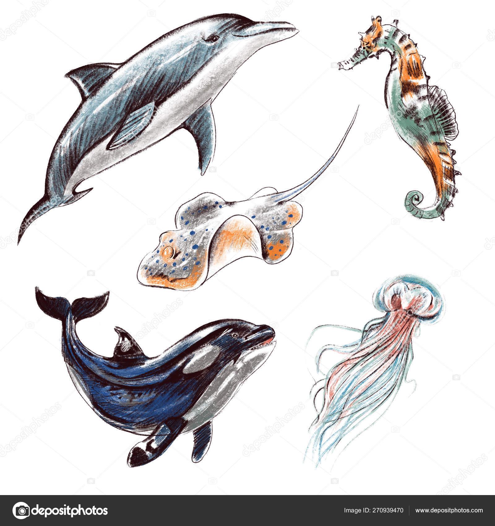 Realistic Jellyfish Drawing Digital Illustration Set Imitating Colored Pencils Realistic Drawing Sea And Ocean Creatures Dolphin Killer Whale Jellyfish Stingray Sea Horse Stock Photo C Irinagorbunovaart 270939470