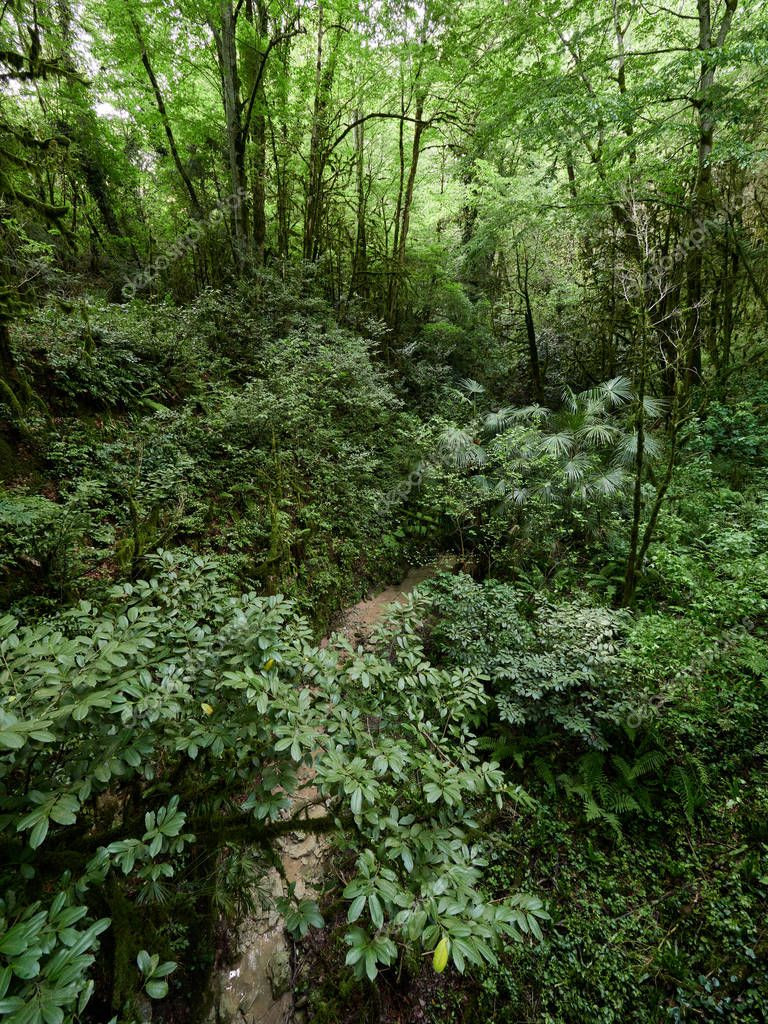 Thicket of dense green forest with parched stream