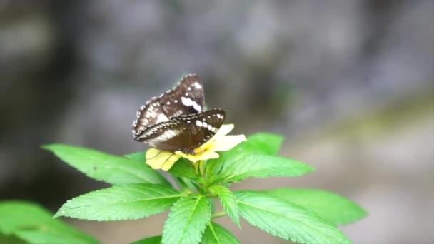 Černý strukturovaný motýl na žlutém květu