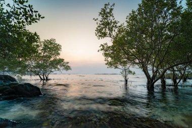 """Картина, постер, плакат, фотообои """"hdr ландшафт заката. мангровое дерево и камень были поражены смоо модульные"""", артикул 234363868"""