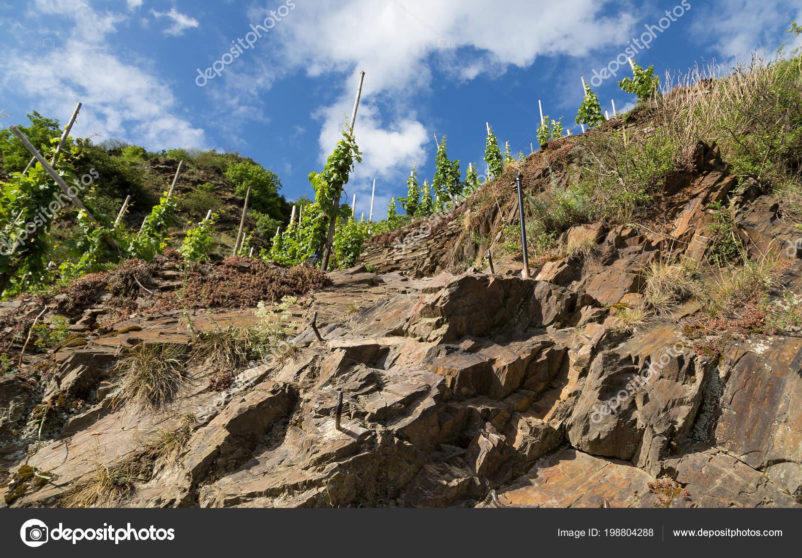 Klettersteig Mosel : Calmont klettersteig zwischen bremm und eller der mosel