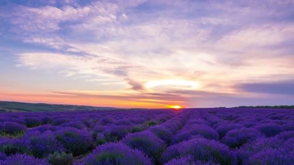 Západ slunce nad poli levandule