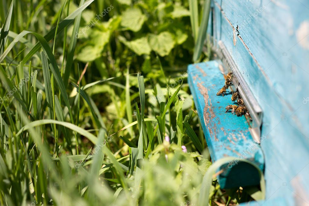 Bees fly out of evidence. Bees collect nectar