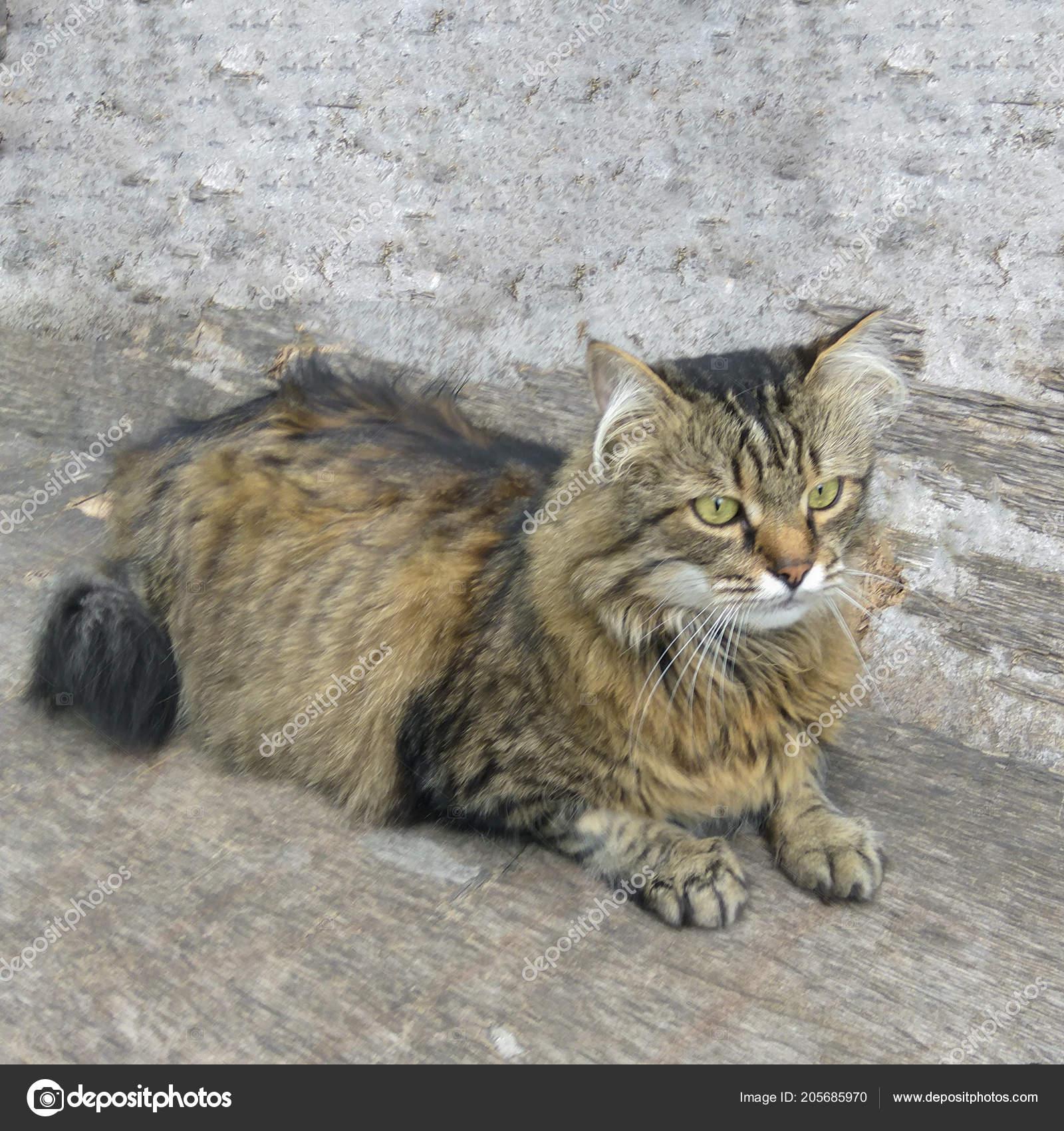velká kočička pic