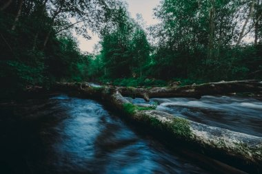 Great photo of a river with running water through a fallen broken tree over stream in the summer forest