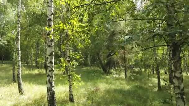 Kilátás a zöld az erdőben, fák, természet.