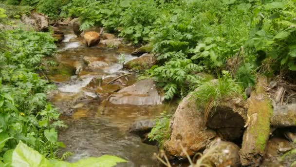Flow down clean water through stones in forest water fall