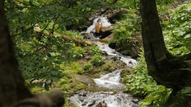 long shot of small forest waterfall in Sochi mountains