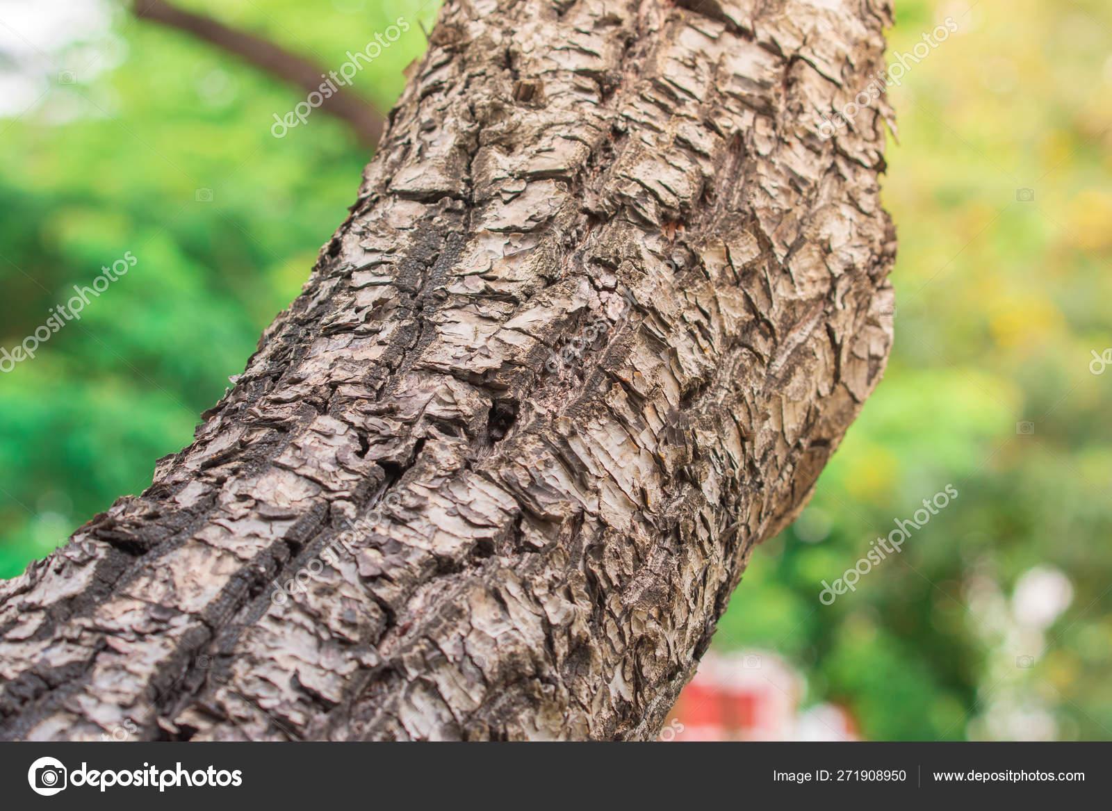 Closeup Giant Tree Bark Textures Yellow Sunlight Selective