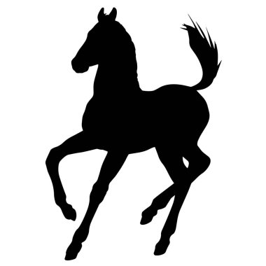 Hand drawn vector silhouette of  foal isolated on white background. Black and white  stock illustration of baby horse. icon
