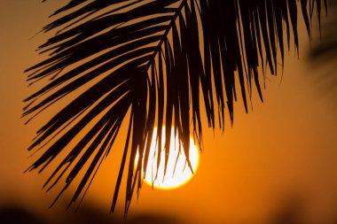 Palms at sunset, Playa Zahora, Andaluca, Spain