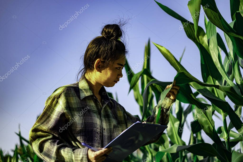 young farmer observing some charts vegetable filed in mobile phone, Eco organic modern smart farm 4.0 technology concept, Agronomist in Agriculture Field read a report