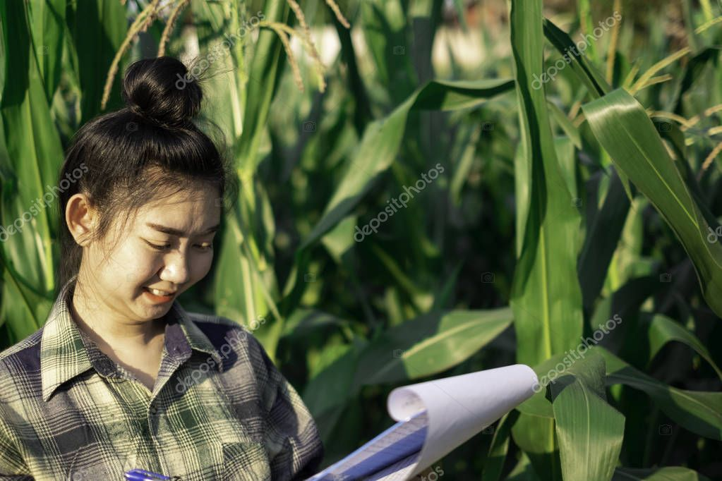 young farmer observing some charts corn in filed, Eco organic modern smart farm 4.0 technology concept