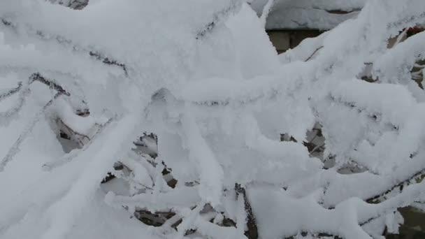Sněhová pokrývka na větvích stromů