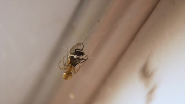 a pók vadászik a menet közben