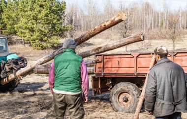Mekanik yükleme ve ulaşım çam ahşap bir traktör kullanma