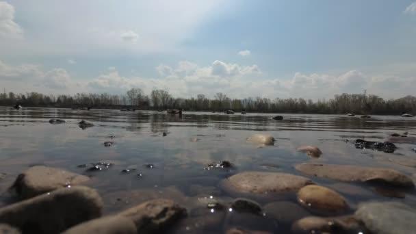 Enten und Tauben füttern in Ufernähe