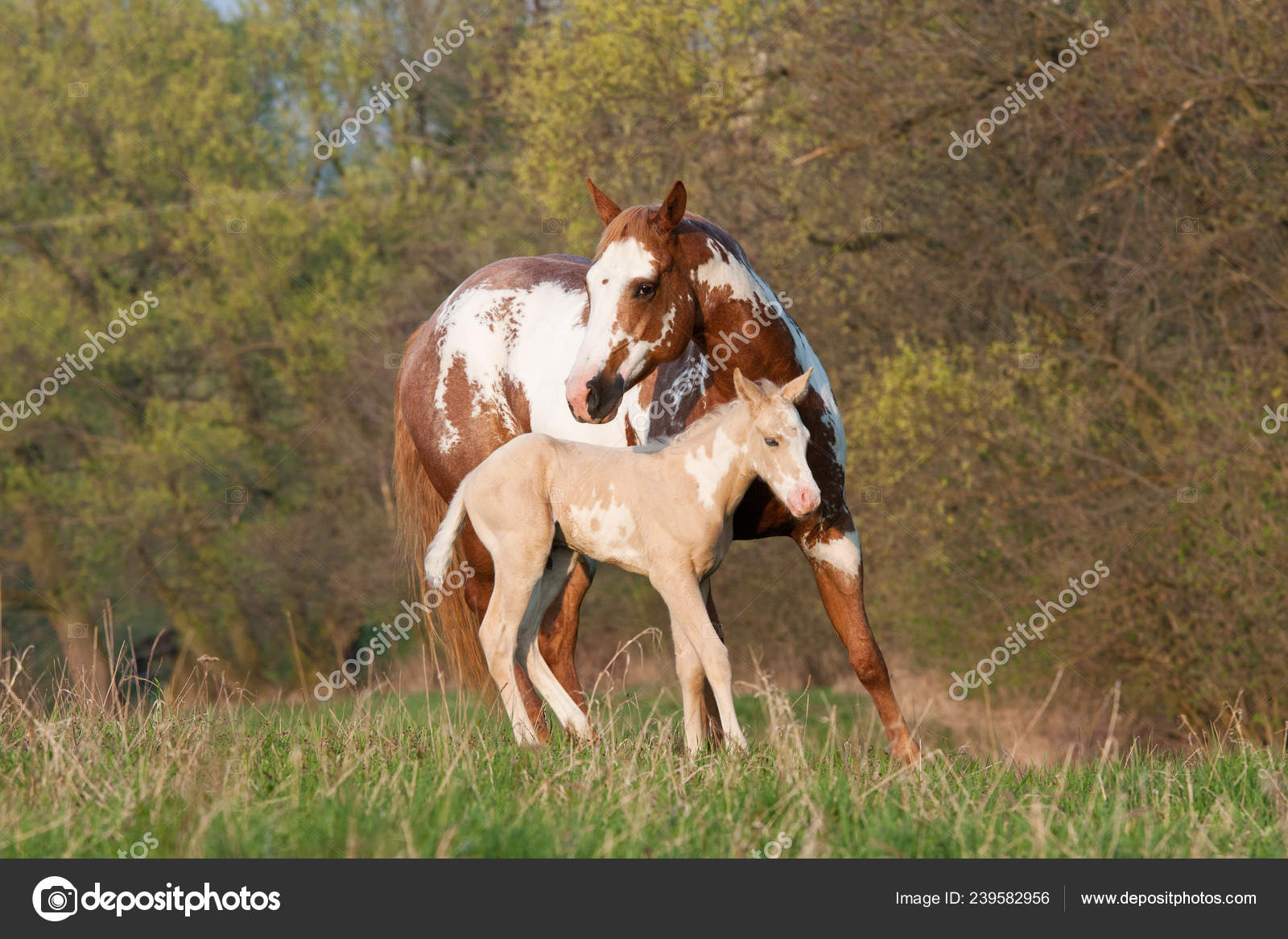ᐈ Horse Painting Canvas Stock Pictures Royalty Free Paint Horse Pics Download On Depositphotos