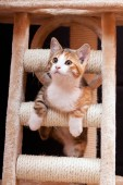 Süße junge Tabby Katze am Kratzbaum vor schwarzem Hintergrund