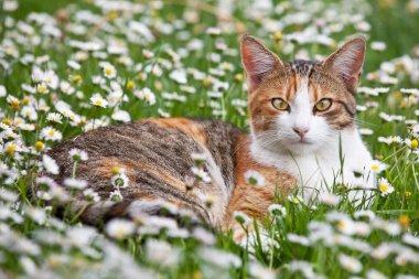 Portrait of nice cat