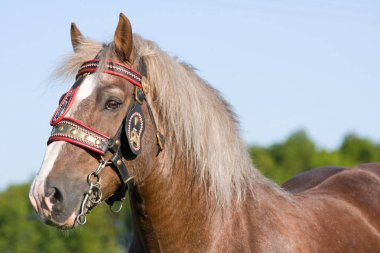 Portrait of nice big horse with bridle